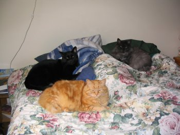3sleepykitties_sm.jpg